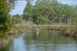 Canoeing down Saintys Creek