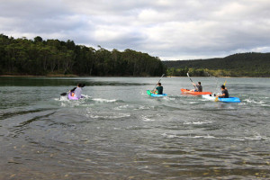 Kayak race as part of a corporate event at the Bruny Island Lodge.