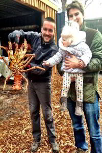 Big crayfish catch. The five kilogram Southern Rock Lobster was caught snorkelling and returned after a quick photo