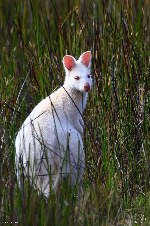 Bruny Island Tasmania Wildlife